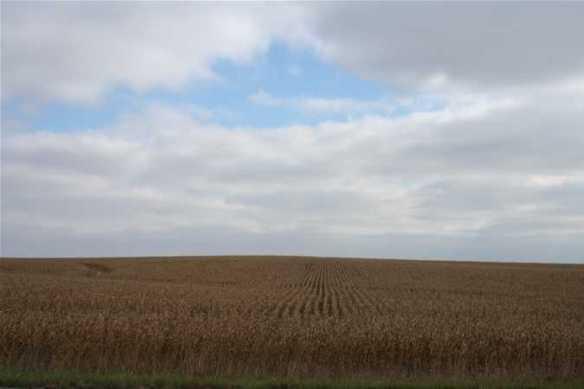 cornfield iowa