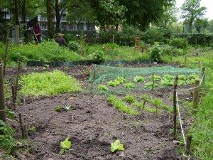 my garden in wageningen