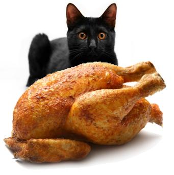 Best Good Cheap Cat Food