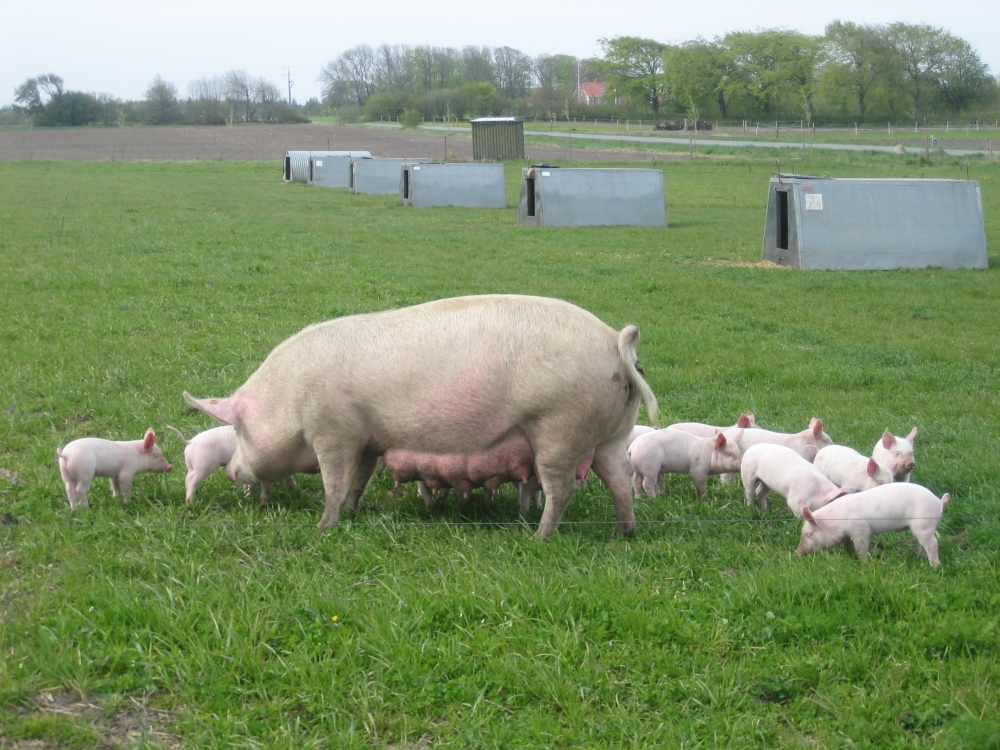 Danish Citizens Visited Pig Farms (2/2)