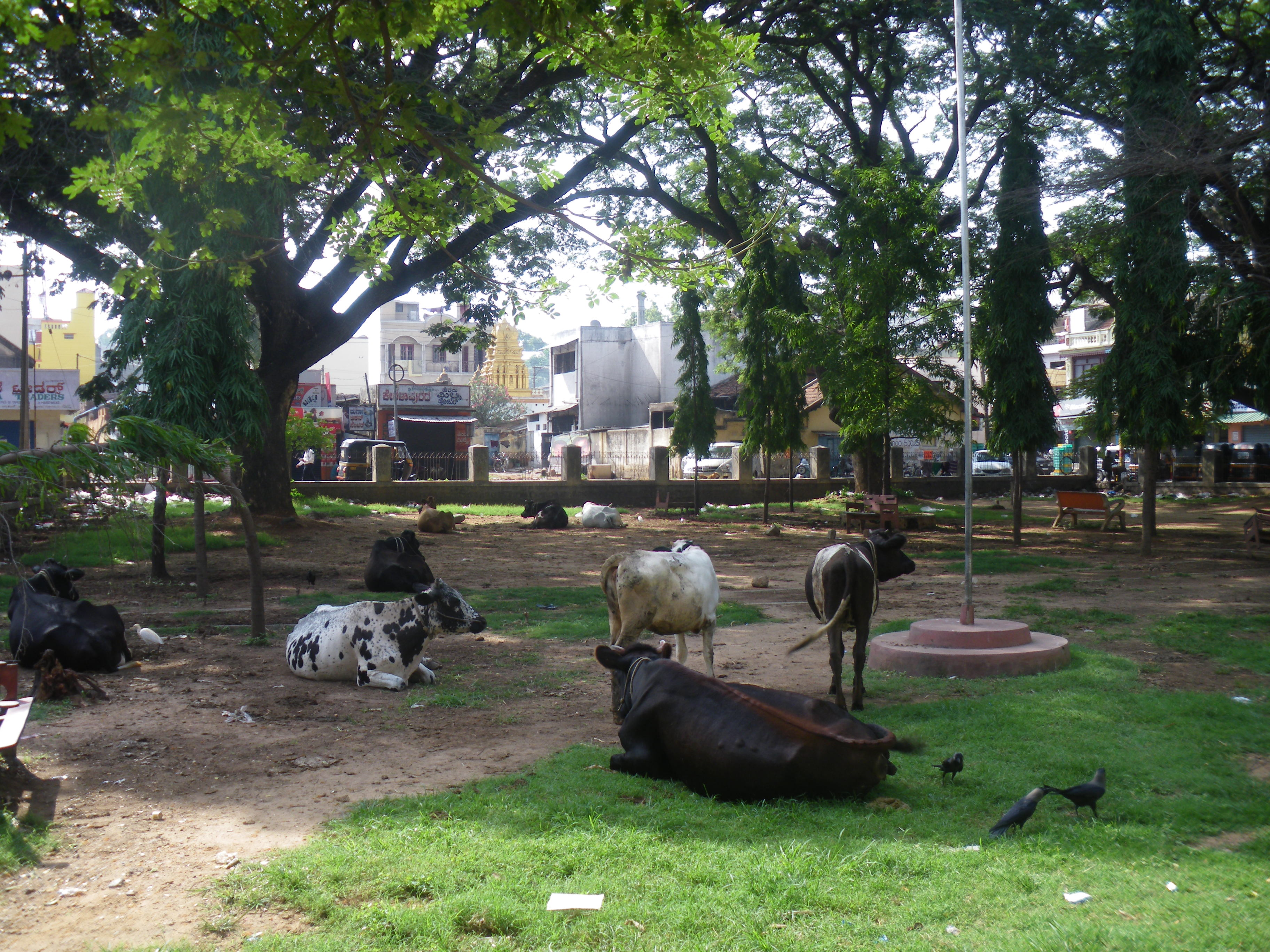 thesis on agriculture and rural development