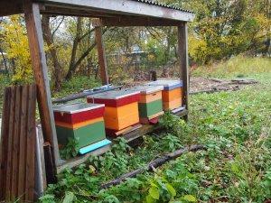 Bees are hibernating