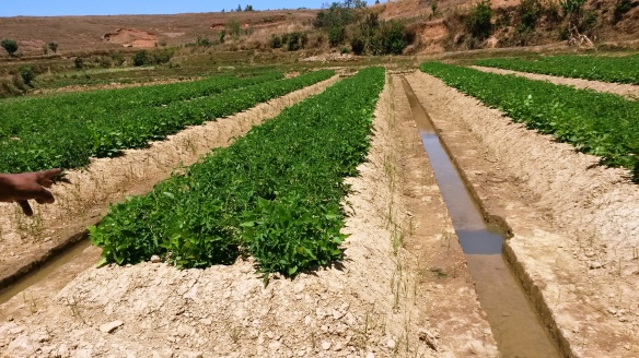 Pic6 Irrigation