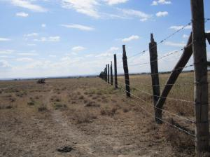 2.Fenced areas can preserve grass for a household`s cattle and allow their nourishment on the own farmlands through - parts of - the dry season.