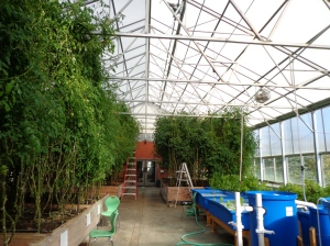 Inside the greenhouse at the Sage School, Hailey (Idaho)