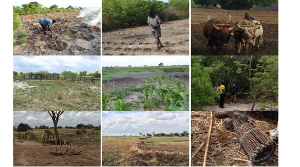 Best agricultural practices in Kapanda, Zambia