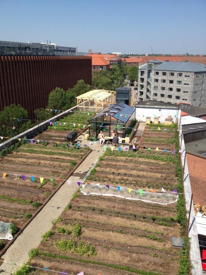 Urban Agriculture (Shuang Liu)