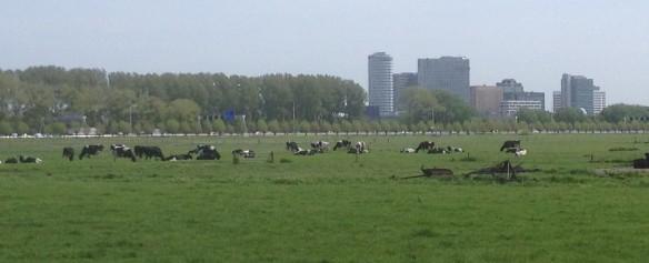 Amstelland - Steggerda