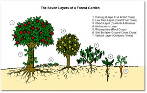 seven-layers-of-forest-garden